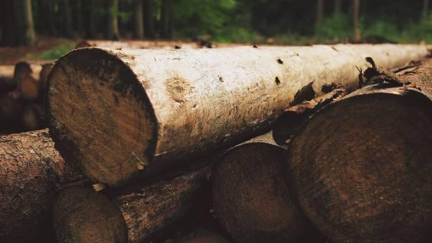wood logs lumber  Free Photo
