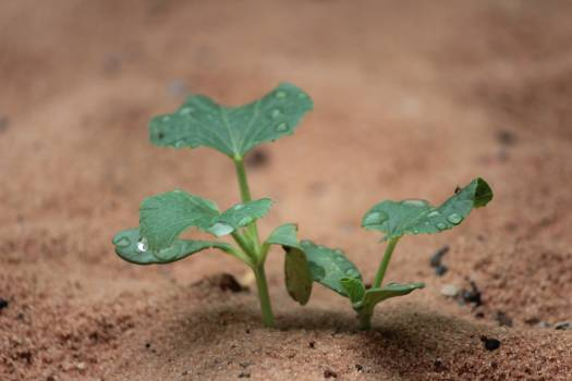 Seedling Plant Leaf Free Photo