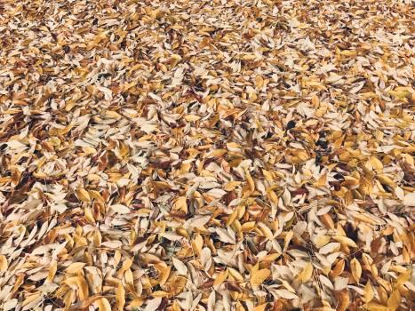 Seed Grain Wheat Free Photo