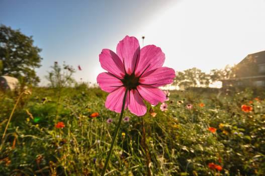 wild flowers fields sunrise  Free Photo