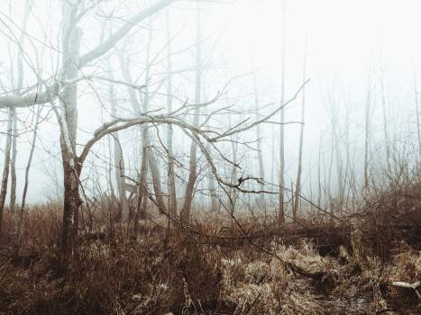 fog forest woods  Free Photo