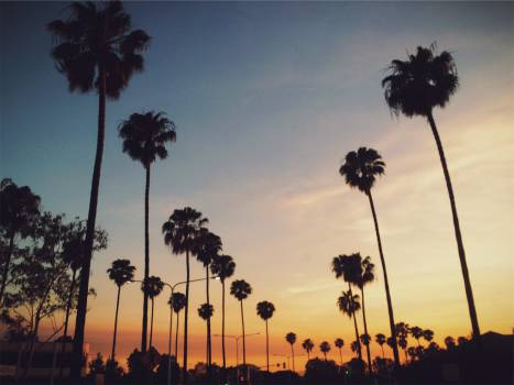 palm trees sunset sky  Free Photo