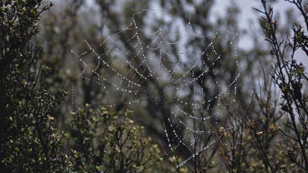 Spider web Cobweb Web Free Photo