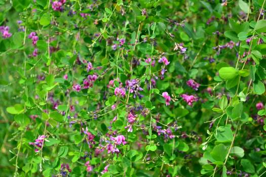 Flower Plant Herb #193415
