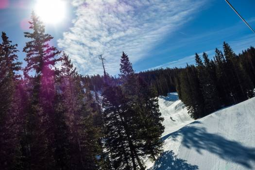 Fir Tree Pine Free Photo