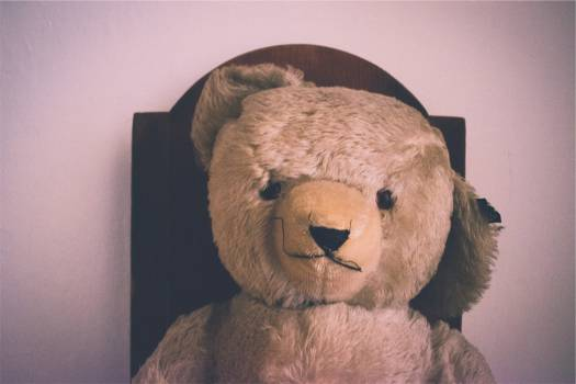 teddy bear stuffed animal  #19383