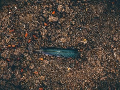 feather ground dirt  Free Photo