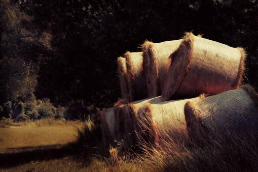 grass hay bales  #19451