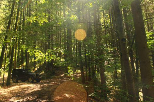 jeep forest woods  Free Photo