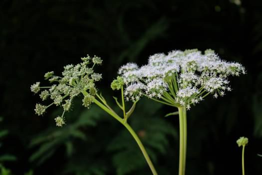 Herb Plant Leaf Free Photo