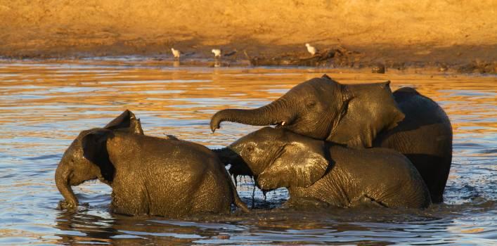 Elephant Indian elephant Hippopotamus #195075