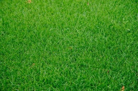 Grass Greenery Lawn Free Photo