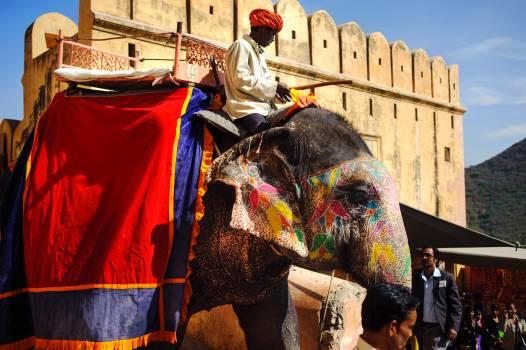 Armor Elephant Shield Free Photo