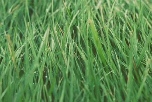 green grass  Free Photo
