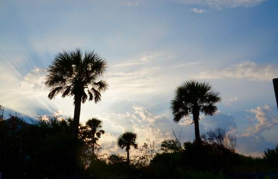 Palm Tree Tropical #195793