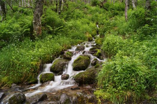 stream water rocks  Free Photo