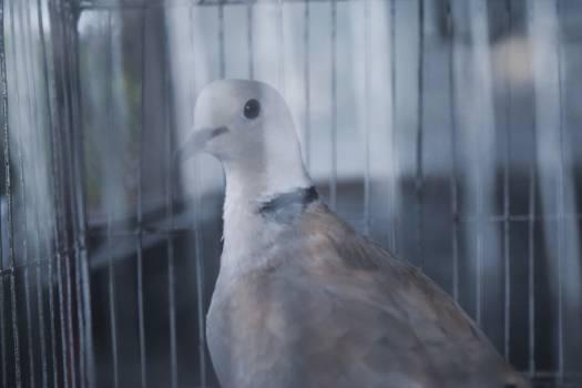 Dove Pigeon Bird #196072