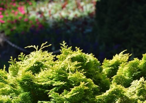 Plant Herb Vascular plant Free Photo