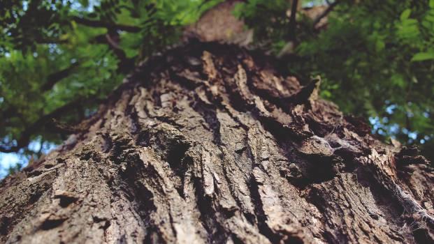 tree trunk bark nature  #19629