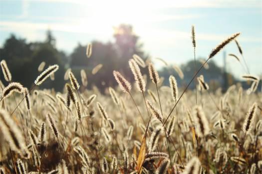 plants field sunshine  Free Photo