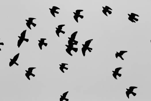 birds animals flight  Free Photo