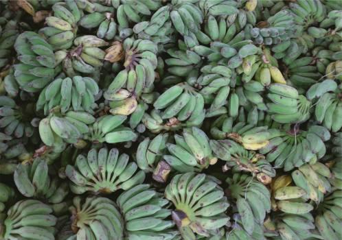 plantains bananas fruits  Free Photo