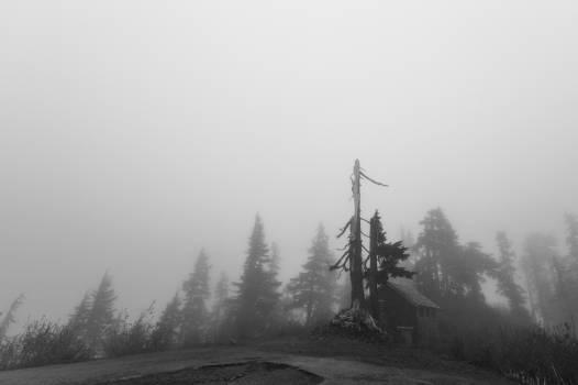 grey foggy trees  Free Photo