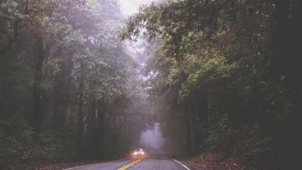 road fog mist  #19678