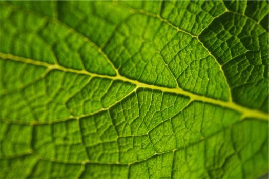 green leaf  Free Photo