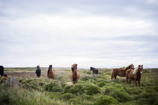 horses animals mane  #19741