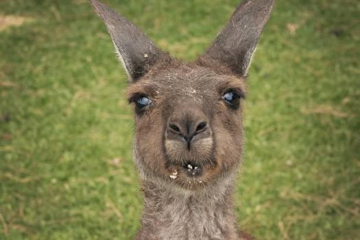 Llama Ungulate Mammal #197656