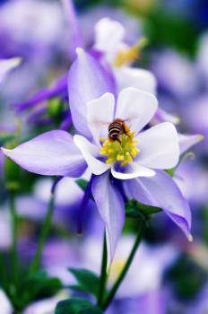 flower bee nature  Free Photo