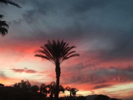 Tree Sky Palm #198209