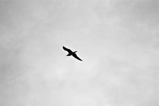 bird flying sky  #19822