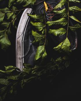 Plant Light Leaf Free Photo