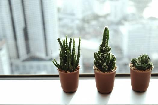 Plant Pot Cactus Free Photo