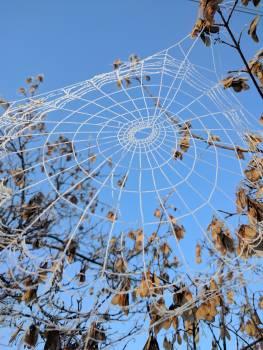 Cobweb Spider web Web Free Photo