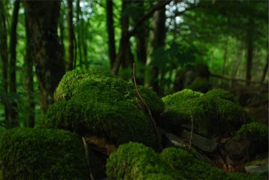 green moss forest  #19885