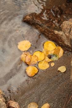Edible fruit Fruit Citrus #198875