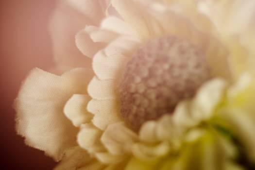flower nature  Free Photo