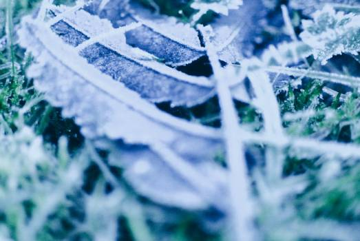 Negative Ice Film Free Photo