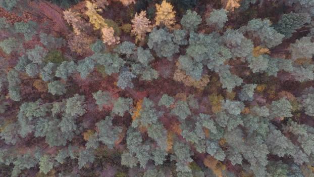 Texture Rough Invertebrate Free Photo