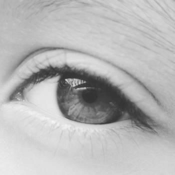 Eyebrow Eye Make Free Photo