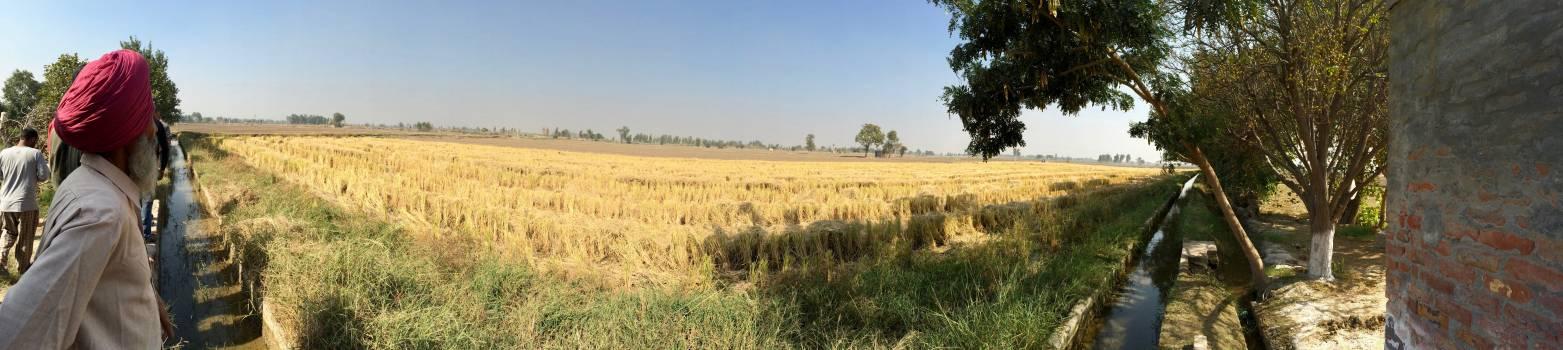 Field Land Wheat Free Photo