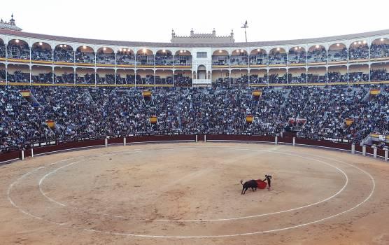 matador bullfighter torero  #19932