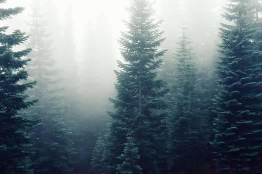 forest fog foggy  Free Photo