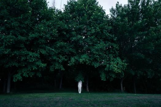 green trees park  #19960