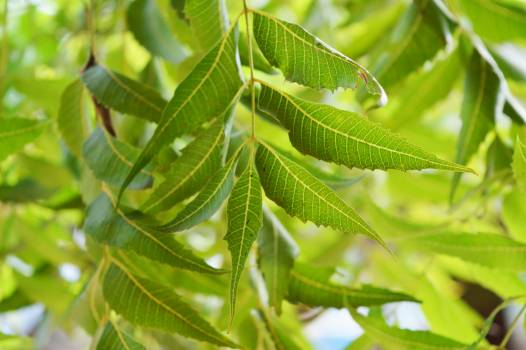 Plant Leaf Insect Free Photo