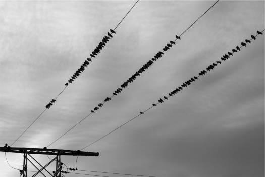 power lines birds sky  Free Photo