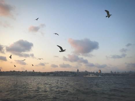 seagulls birds sky  Free Photo